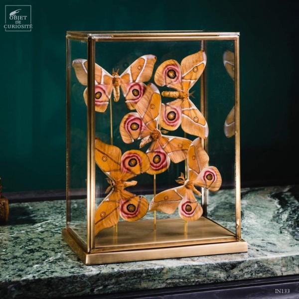 5 papillons Antherina Suraka...