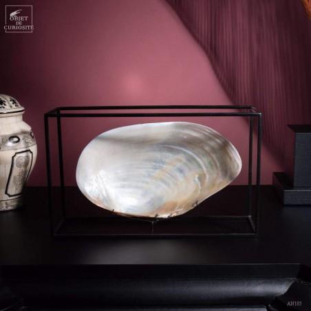 White cebu clams in cage