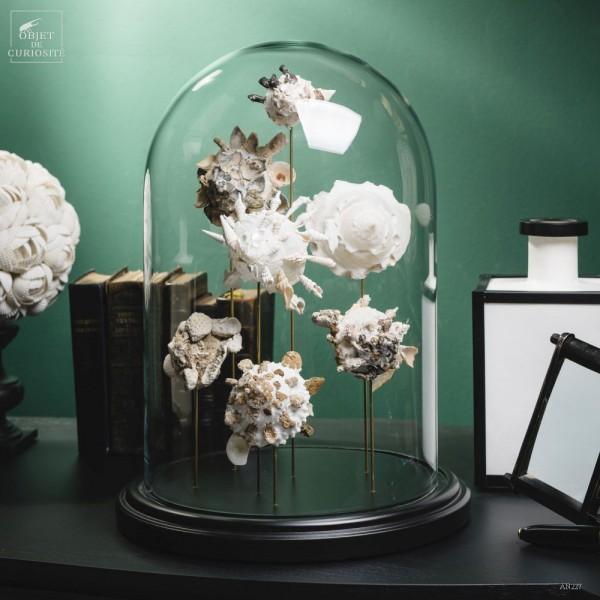 Globe de 7 coquillages Xenophora
