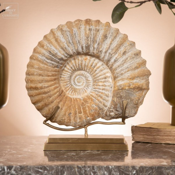 Ammonite from Morocco on brass base