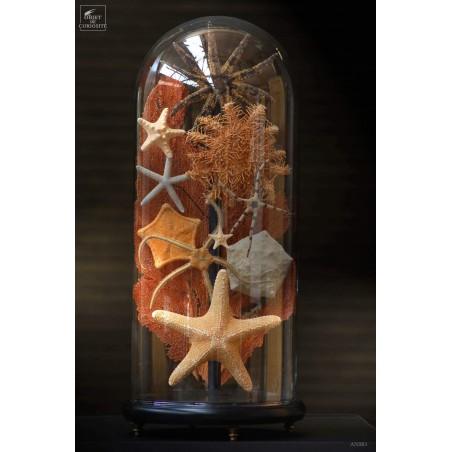 Etoile de mer en famille (10 espèces) sous globe TGM