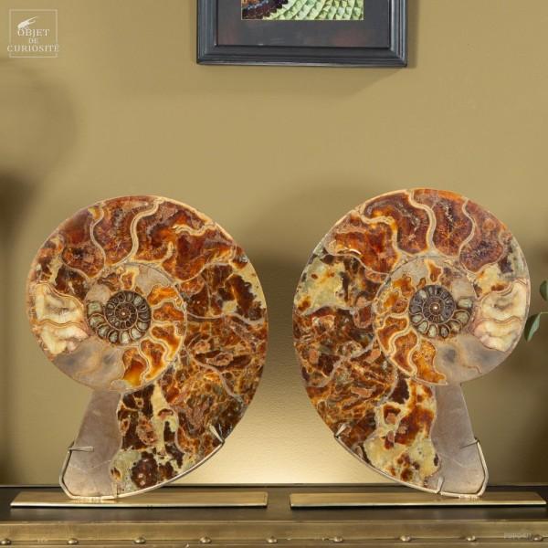 Very Large Madagascar ammonite cut in...