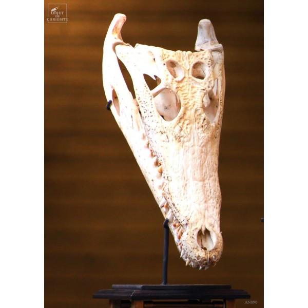 Crane de crocodile 39cm env. sur support fer
