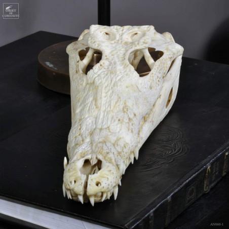 37-39cm Crocodylus niloticus skull