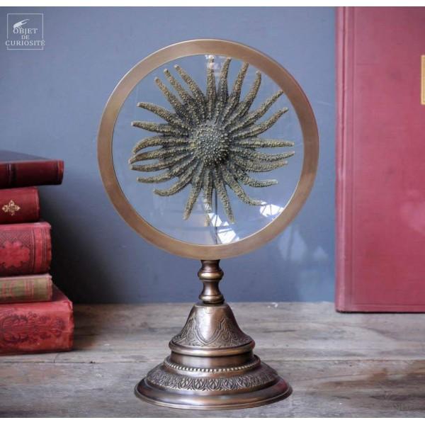 Sunflower starfish behind magnifier