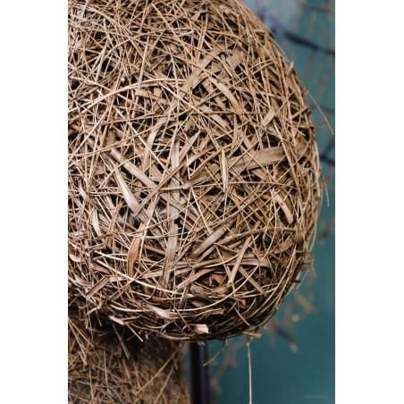 Weaver-birds nest under square glass