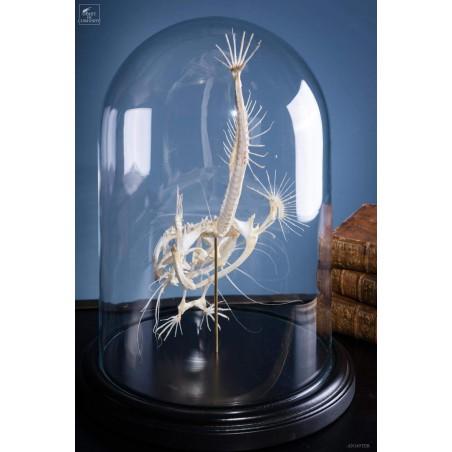 Angler fish skeleton under glass