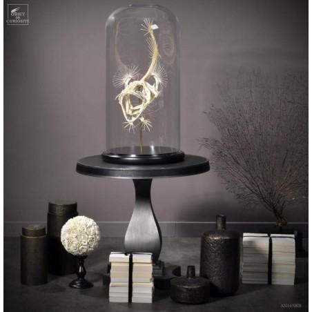 Squelette de baudroie sous globe GM
