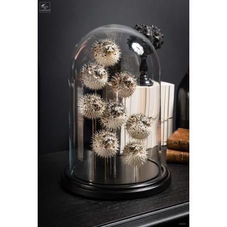 Globe de 8 mini diodons
