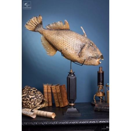 Stuffed Trigger fish