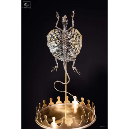 Flying lizard under glass with brass base