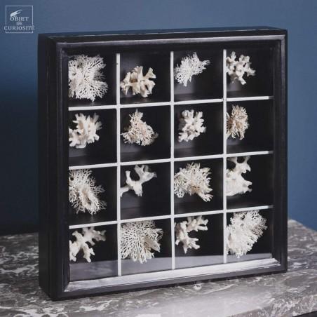 Collection of 16 white Bryozoaires in black box