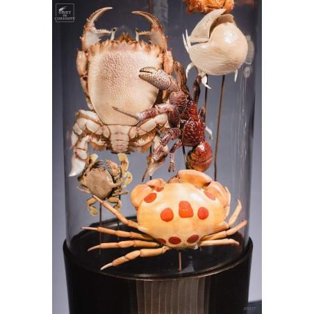 Crabes en famille (7 espèces) dans globe gélule