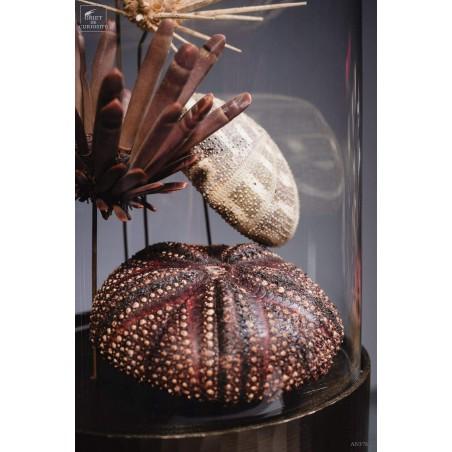 Oursin en famille (5 espèces) dans globe gélule