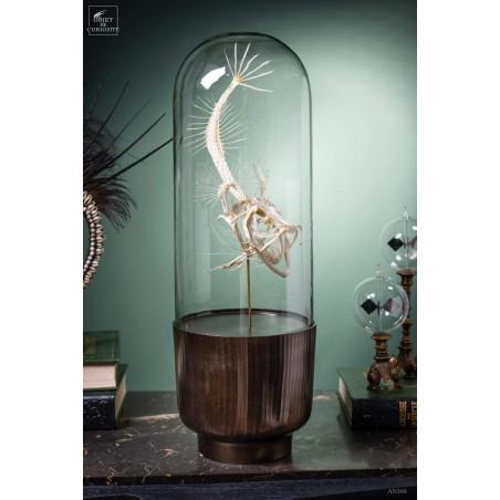 Squelette de baudroie sous globe gélule