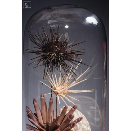 Urchins in family in capsule glass