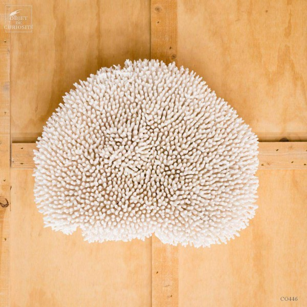 Hanging white coral crown