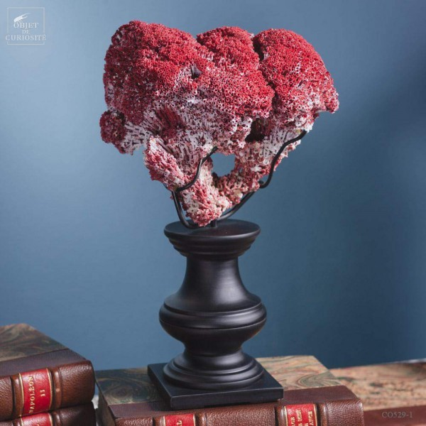 Red coral TUBIPORA MUSICA on black base