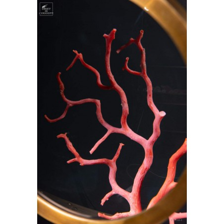 Mediteranean sea red coral behind a magnifier.