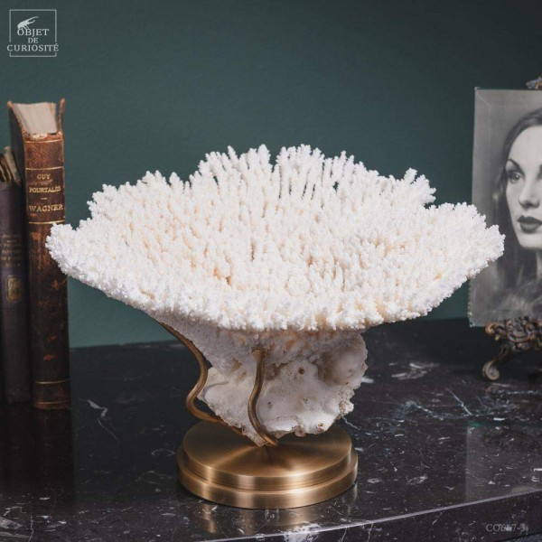 White coral ACROPORA HYACINTUS on brass base