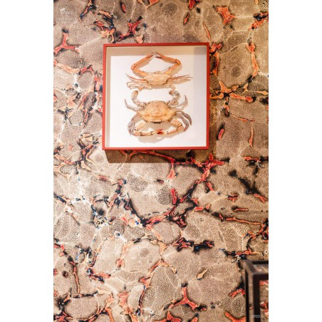 CORAIL (3631A) wall paper Roll 50cm X 960cm