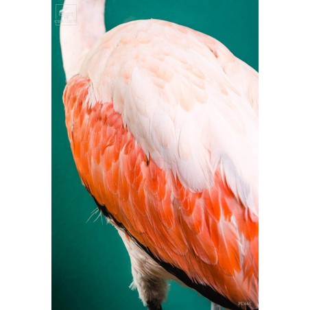 Pink flamingo on black stand -young-