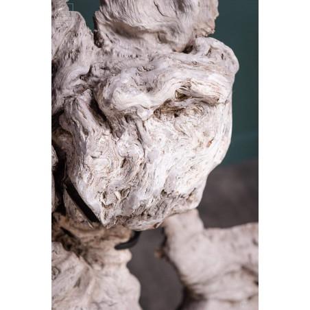 Roots of longan on black base