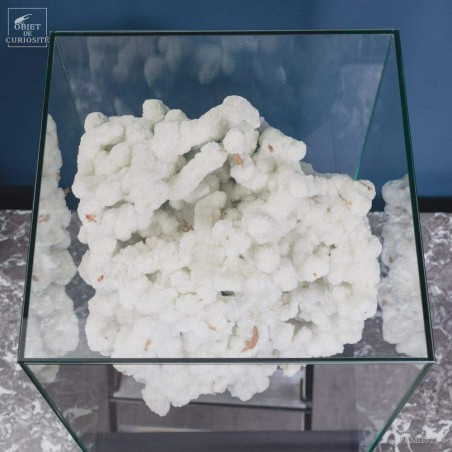 Crystalized branch with gypsum under glass ( Australia)
